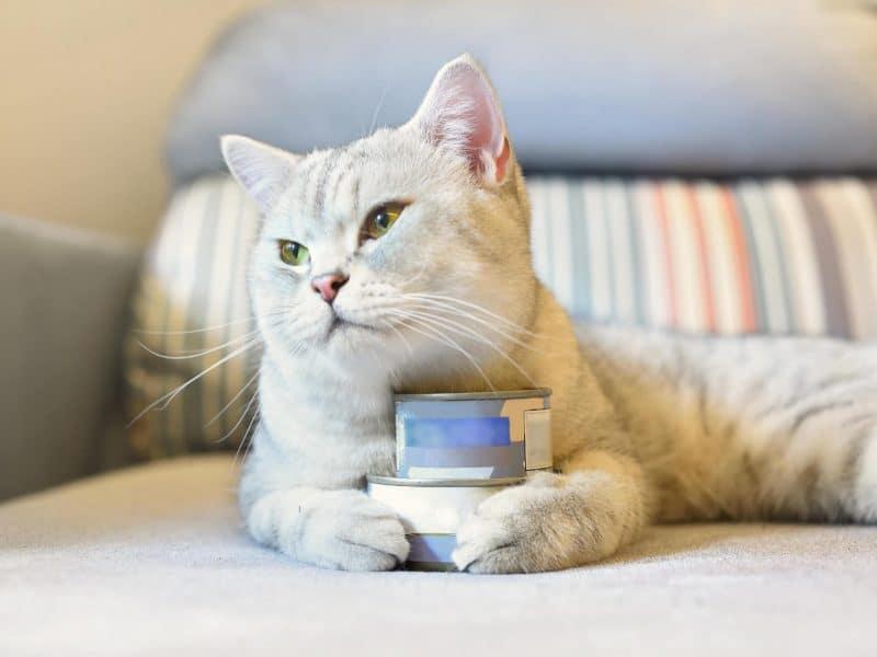 Kedi Mamalarındaki Büyük Tehlike